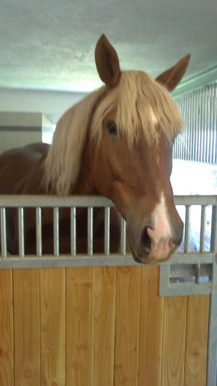 RIP Dea Levira, mein ( Julias) erstes Pferd