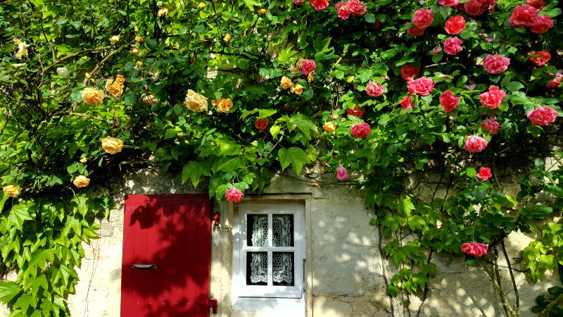 fenêtre sur roses