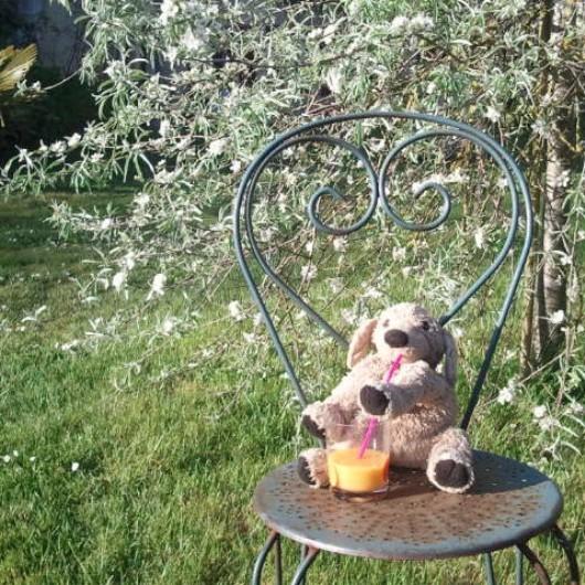 doudou dans le jardin