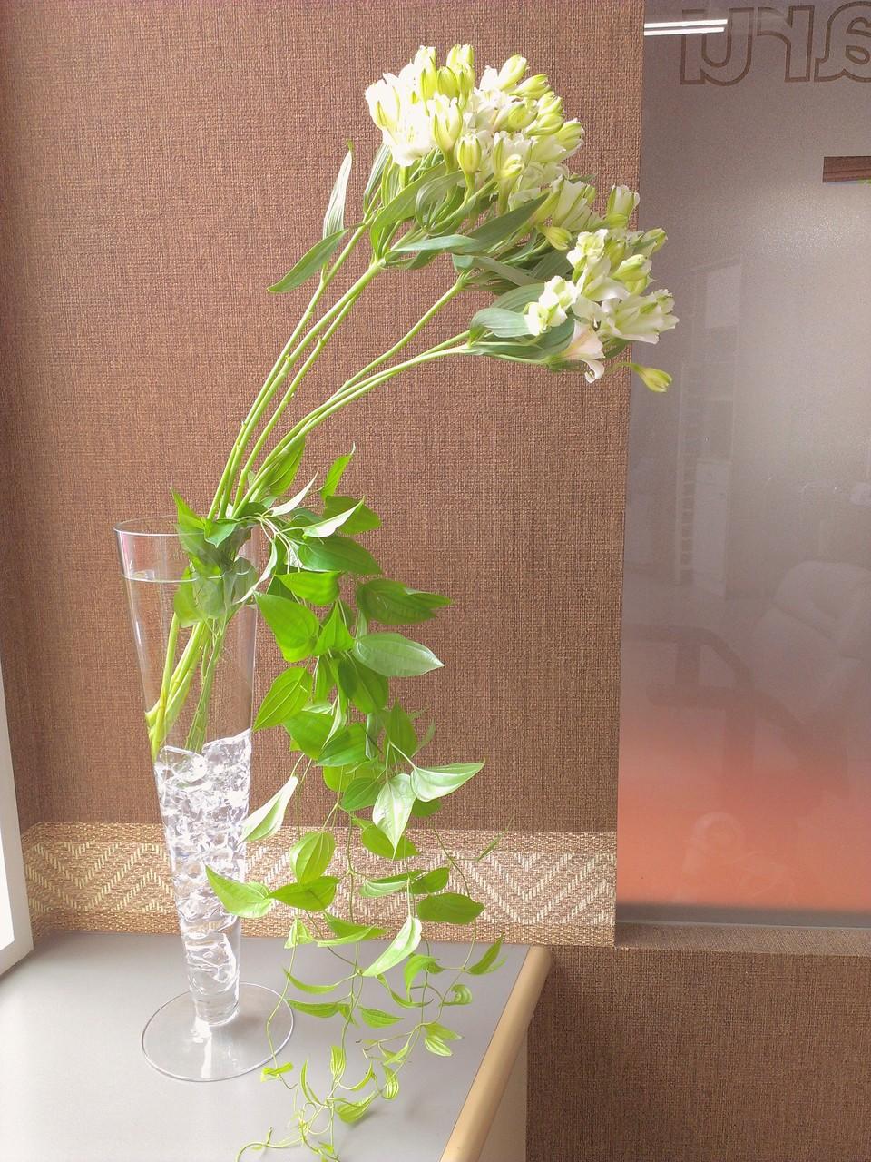 """2014.08.21 アルストロメリア キッス、利休草 ・首を伸ばしたように見える白くて沢山の蕾に囲まれているお花がアルストロメリア キッスで、花瓶から飛び出した蔓が逃げるように下に伸びているのが利休草です。アルストロメリアは非常に長持ちするお花として可憐な様を長く楽しむ事が出来るそうです。又、利休草も涼しさを感じさせる植物ですよね。""""残暑に負けない""""夏のアレンジメントをお楽しみ下さい。花言葉:アルストロメリア キッス【凛々しさ・エキゾチック・やわらかな気配り】、利休草【奥ゆかしさ、清廉、先見の明】"""