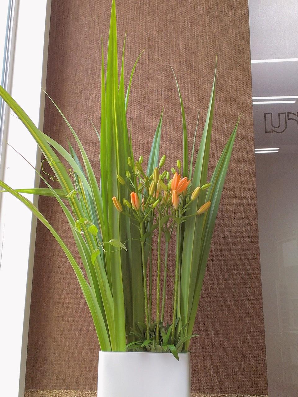 2014.07.30 スカシユリ、サザンクロス、利休草 ・沢山の蕾を携えオレンジ色のお花が咲き始めたスカシユリと、真っ直ぐに筋の通った葉のサザンクロス、蔓を伸ばし自由奔放に上へ上へと延びる利休草。満開のユリが咲き誇る週末頃が見頃になると思います。花言葉:スカシユリ【注目を浴びる、神秘的な美】、利休草【奥ゆかしさ、清廉、先見の明】