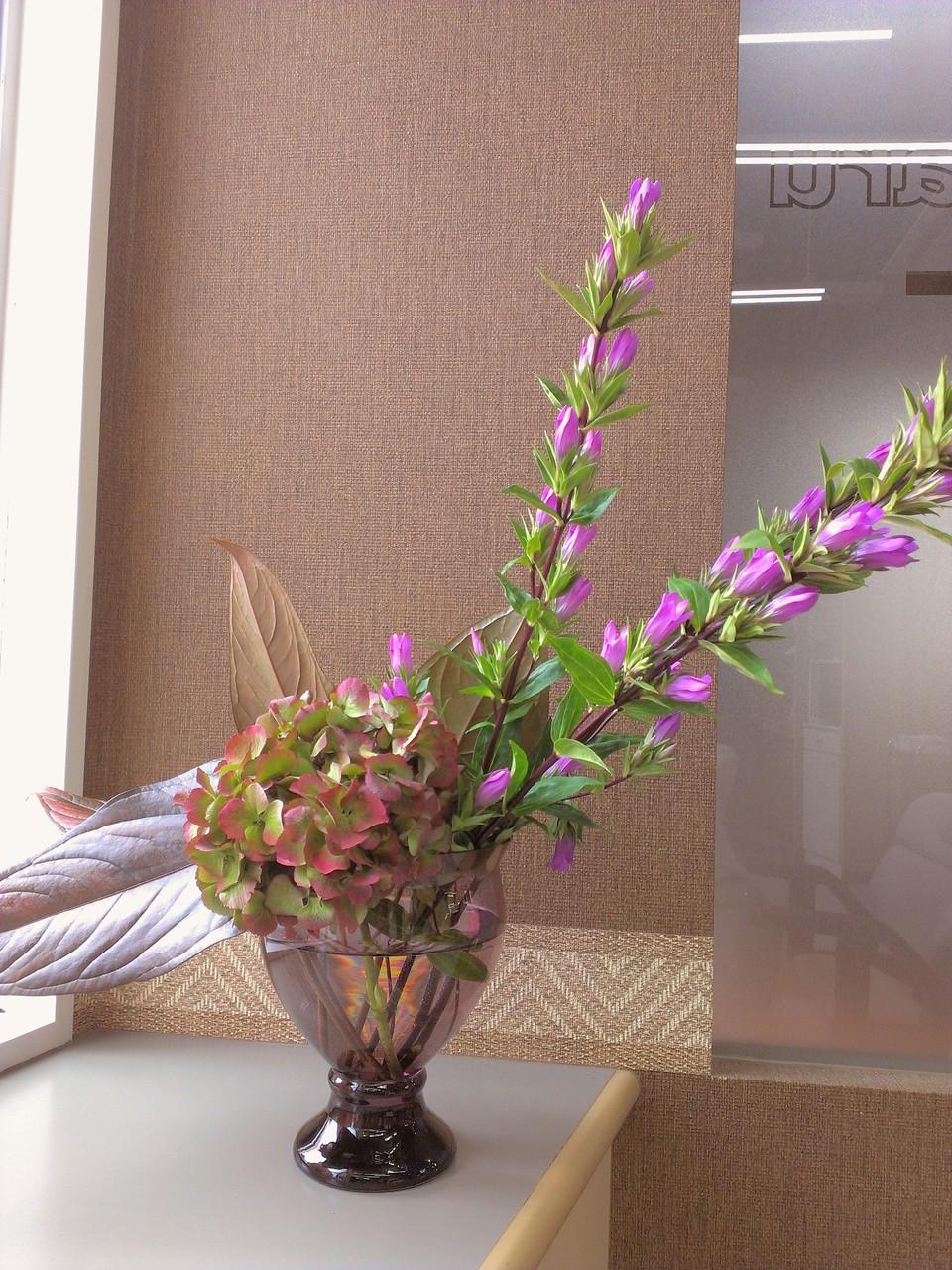 2014.09.17 ハイドランジア(別名:西洋あじさい)、リンドウ(竜胆)、ブロンズリーフ(※アンスリウムの葉) ・花瓶からひときわ大きく咲く緑と赤色のコントラストが素敵なハイドランジア、背が高くピンクのお花と青々とした葉っぱが交互に伸びるリンドウ、ひときわ大きな葉っぱで存在感の有るブロンズリーフのアレンジメントです。今回はシックな色合いのお花を使い秋色を強調させました。花言葉: ハイドランジア【元気な女性、乙女の愛】、リンドウ【あなたの悲しみに寄り添う、誠実】