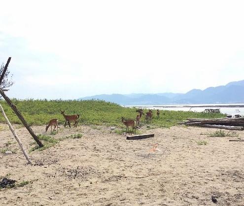 第六参拝所・須屋浦神社 鹿のお出迎え