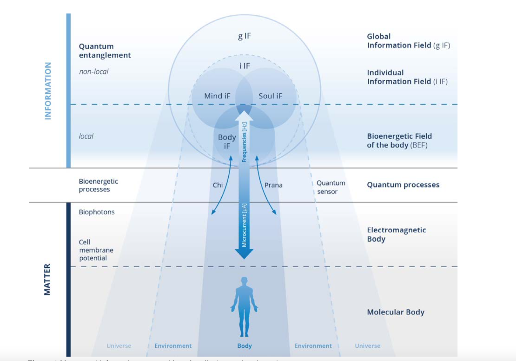 Quantenverschränkte Frequenzen und Kohärenz in bioenergetischen Systemen