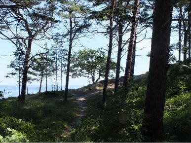 Ostsee-Usedom-Küstenwald-Zempin