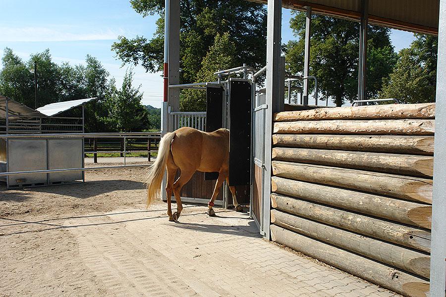 Die meisten Pferde kommen schnell mit der Technik zurecht
