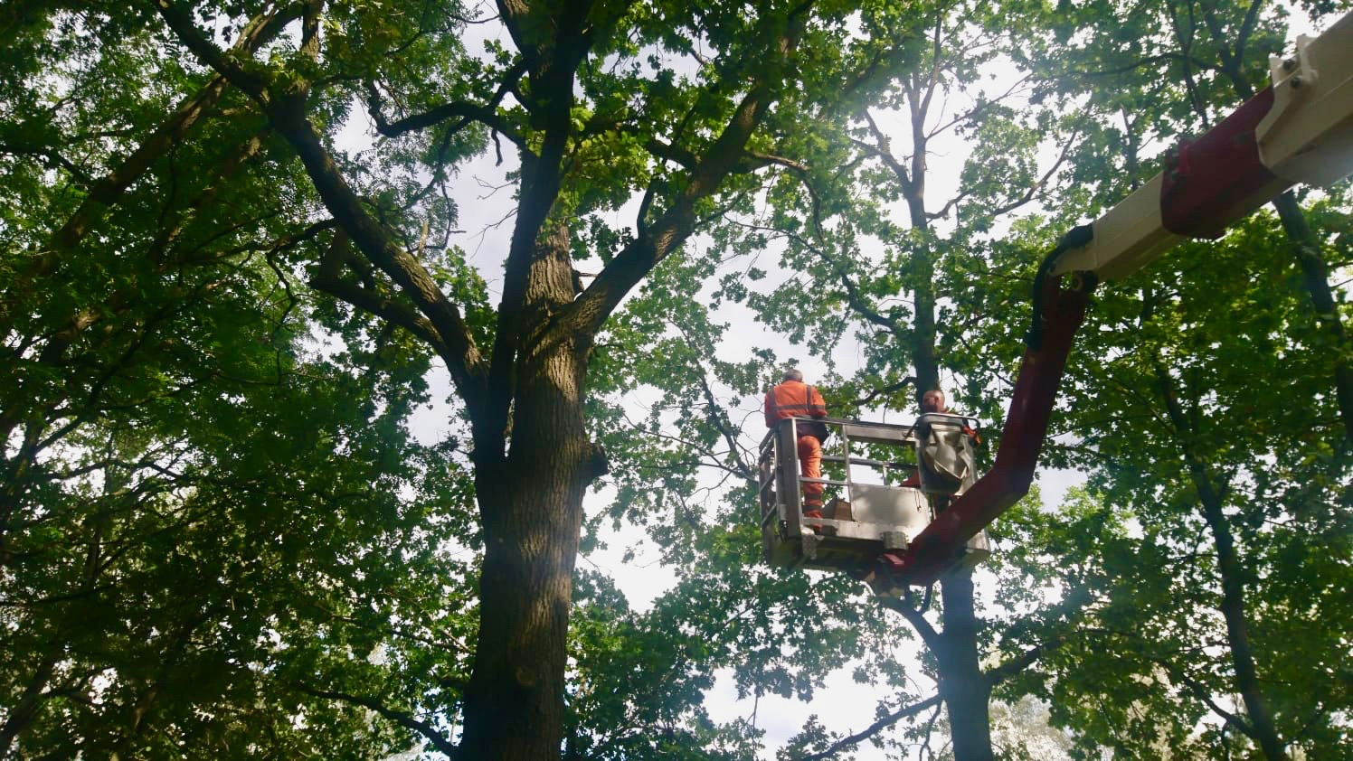 Anbringen der Waldkauz-Nistkästen in Bühlow durch die Firma Baumpflege Jens Balkow aus Drieschnitz