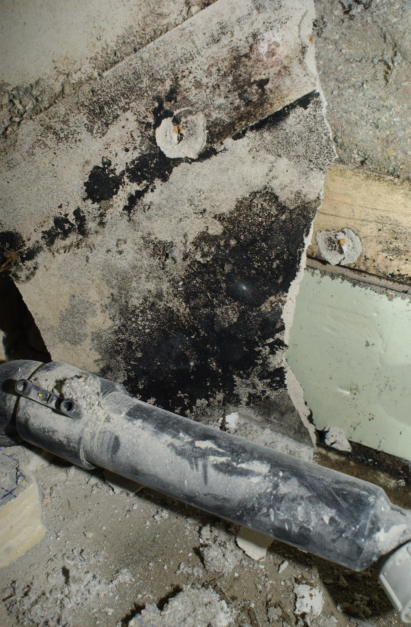 Feuchtigkeit, Wärme und Gipsplatten bilden einen idealen Nährboden für Schimmel...