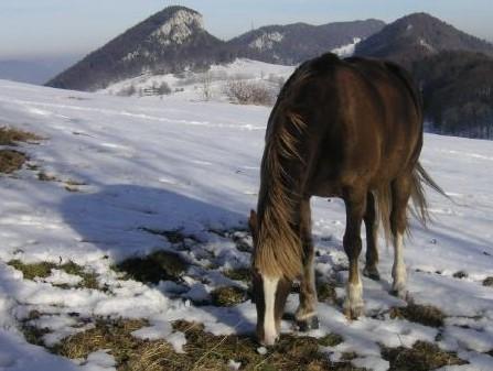 Seillbahn und Wandern Jura