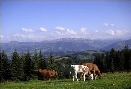 Fotos Emmenthal Schweiz