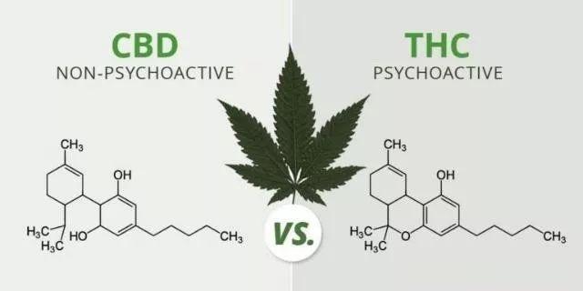 CBD大麻癌症治疗 德国欧亚商旅 www.orasien.com
