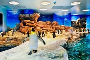 海響館のペンギンプール(海響館のWebサイト)