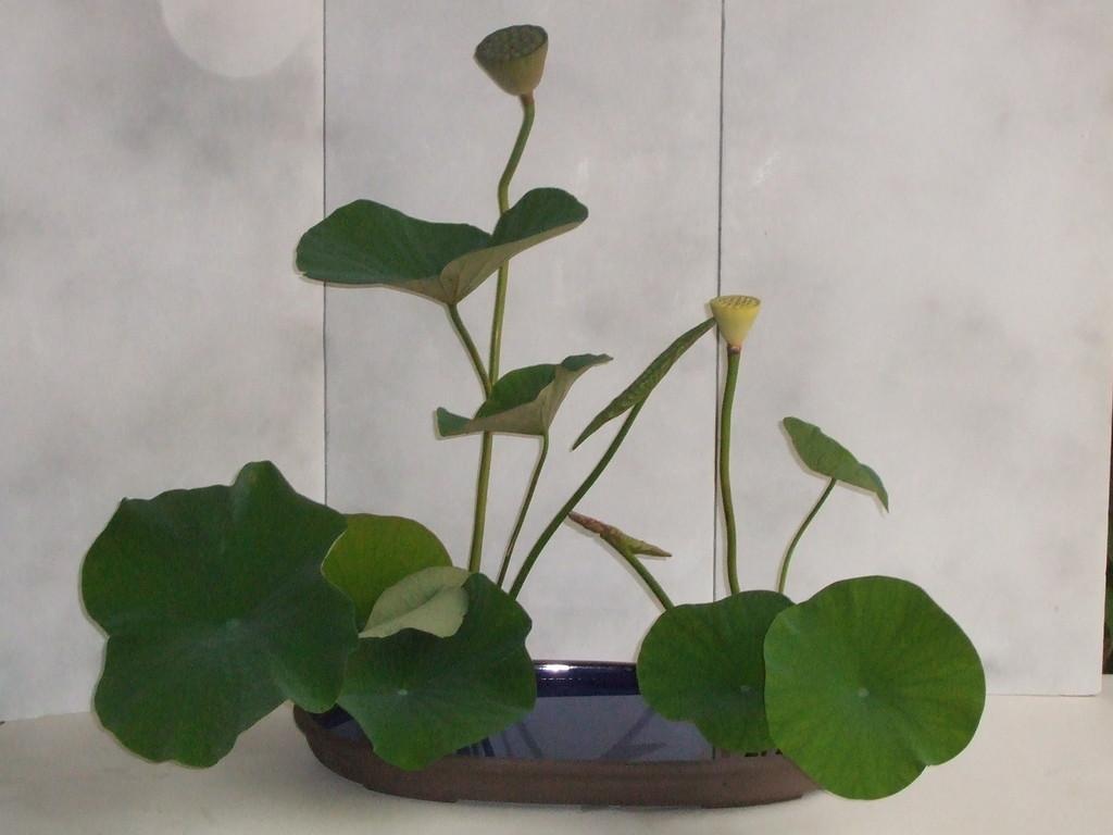 Paysage réaliste de lotus