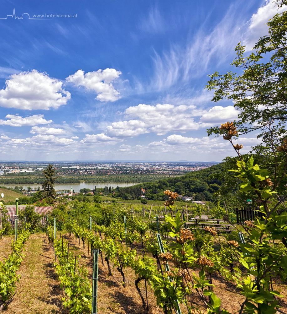 Hotel Vienna - Wien und der Wein