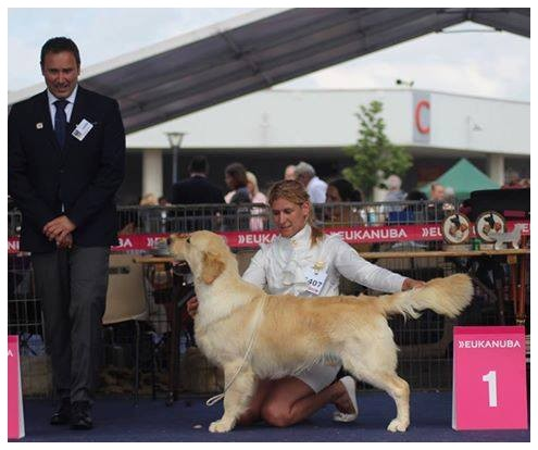 13 mois , BEST JUNIOR DOG Championnat de FRANCE ! Qualifié CRUFTS  2017