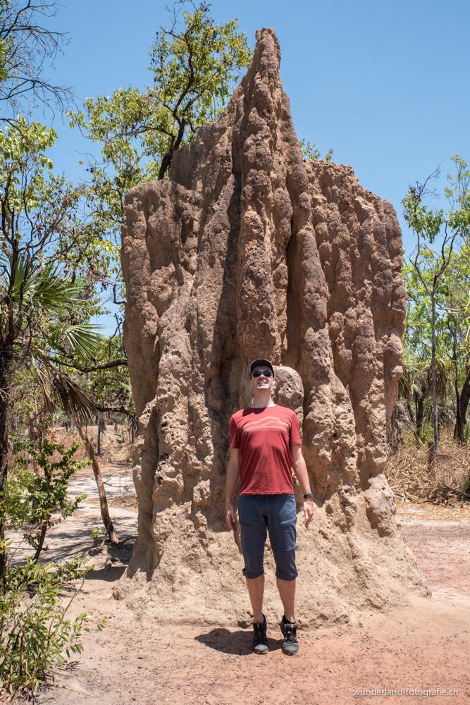 Termiten; die wahren Baumeister Australiens