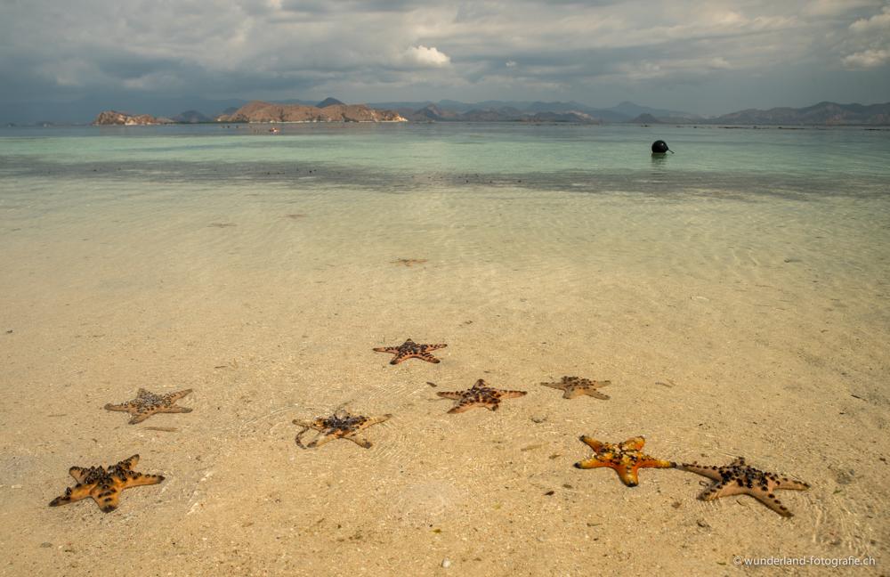 Seesterne am Strand von Kanawa Island