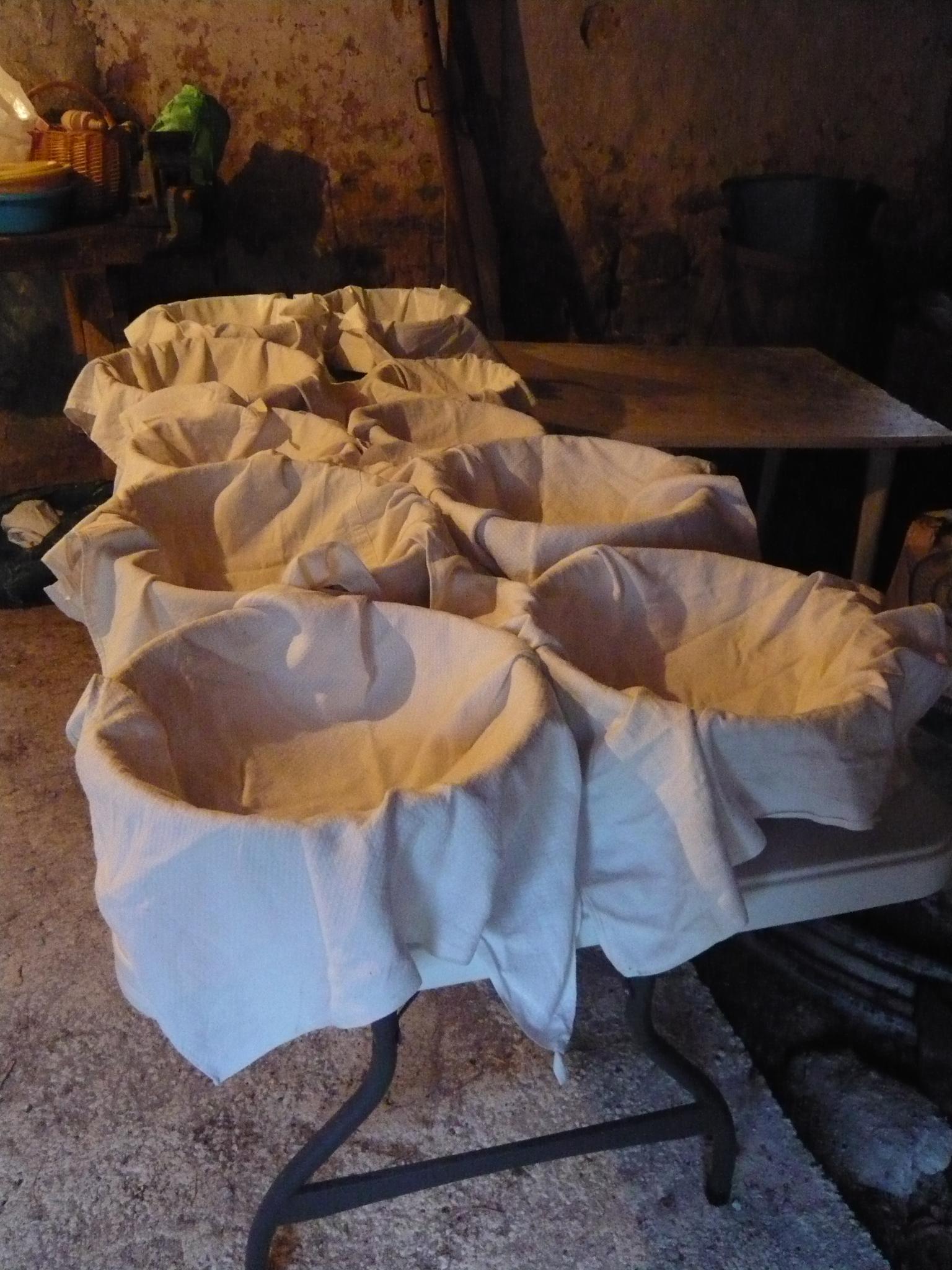 Les paniers attendent les pâtons (boules de pâte)
