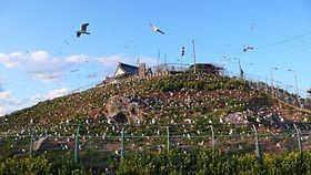 八戸市ウミネコの営巣地 蕪島