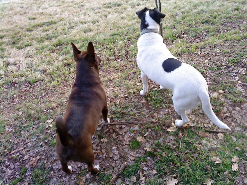 Luky und Pippo
