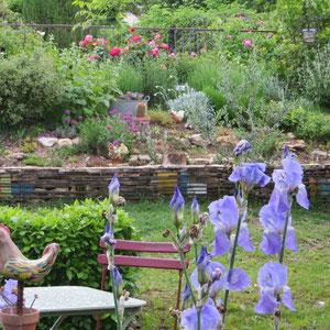 iris dans l'Amphithéâtre de verdure