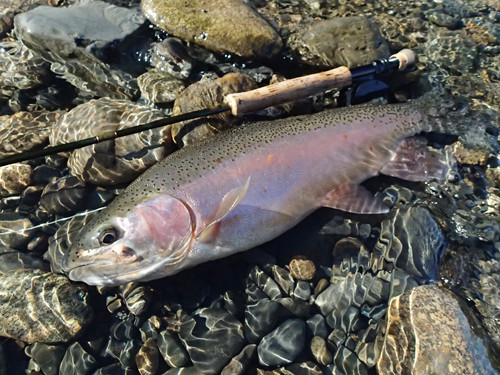 秋のニジマス釣りに適したメソッドを用いることが素晴らしい1尾への最短距離。