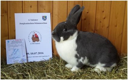 Bestes Tier: 1,0 Mecklenburger Schecke blau-weiß von Dietmar Bertsche