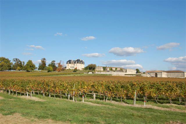 Weinberg mit dem Château Segonzac im Hintergrund