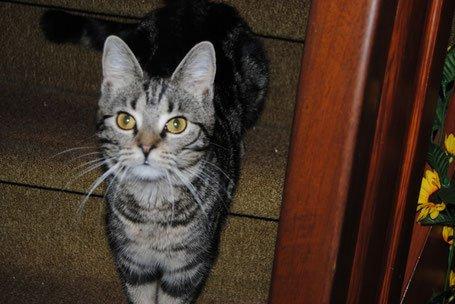Diabetes bei Katzen mit Homöopathie und einer Ernährungsumstellung behandeln