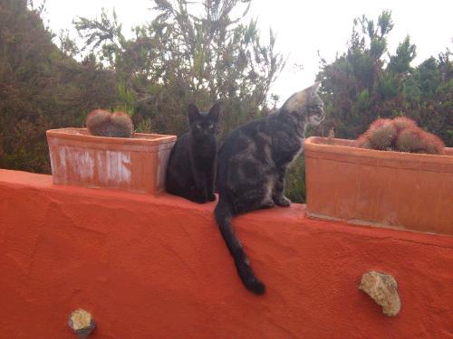 Gesunde und natürliche Basis für Gesundheit der Katze