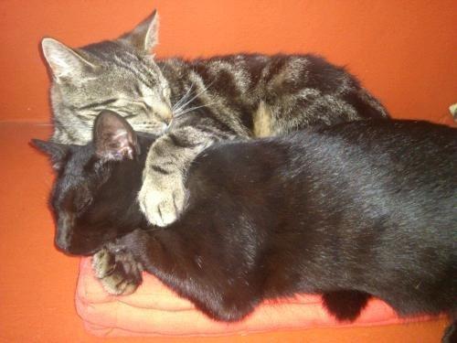 Bierhefe für Katzen für schönes Fell und gegen Flöhe