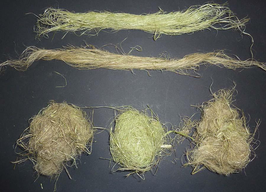 ausgekämmte Fasern