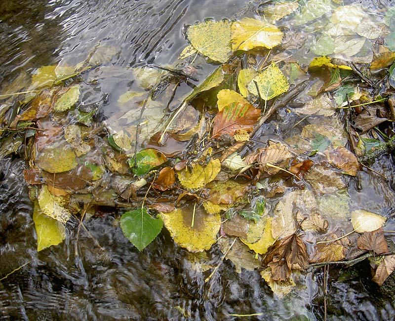 Blätter im Fluss
