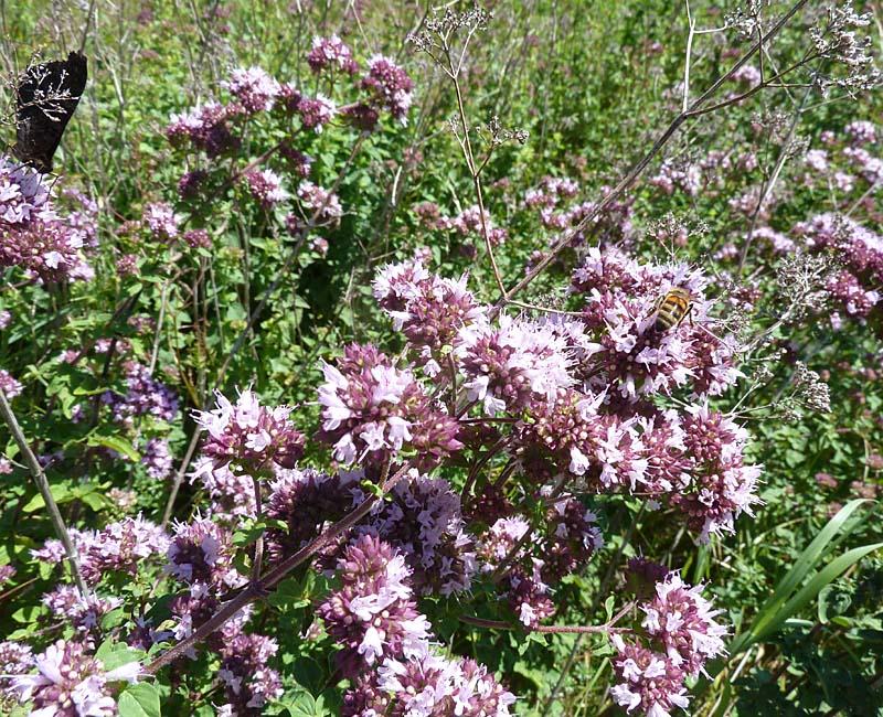 Schmetterlinge und Bienen ganz entspannt
