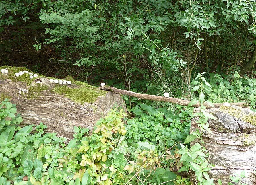 Schneckenbrücke
