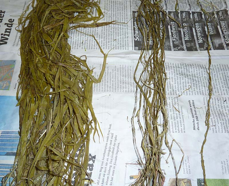 gekochte Fasern, feucht und trocken