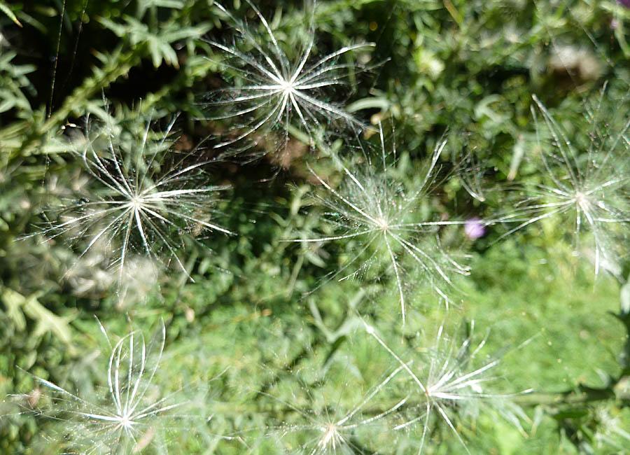 Samen im Spinnennetz
