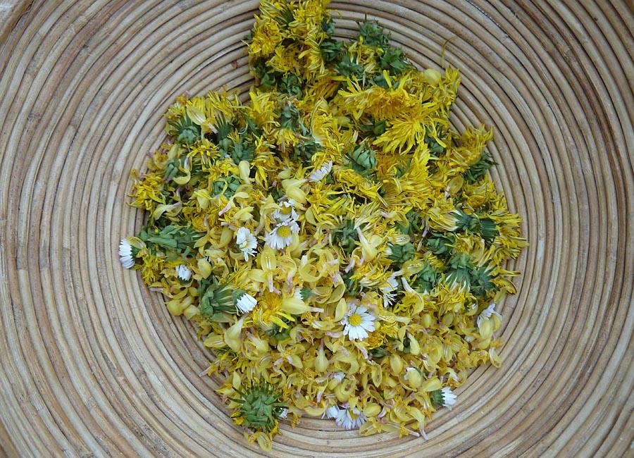 gelbe Blüten: Gänseblümchen, Löwenzahn, Goldnessel