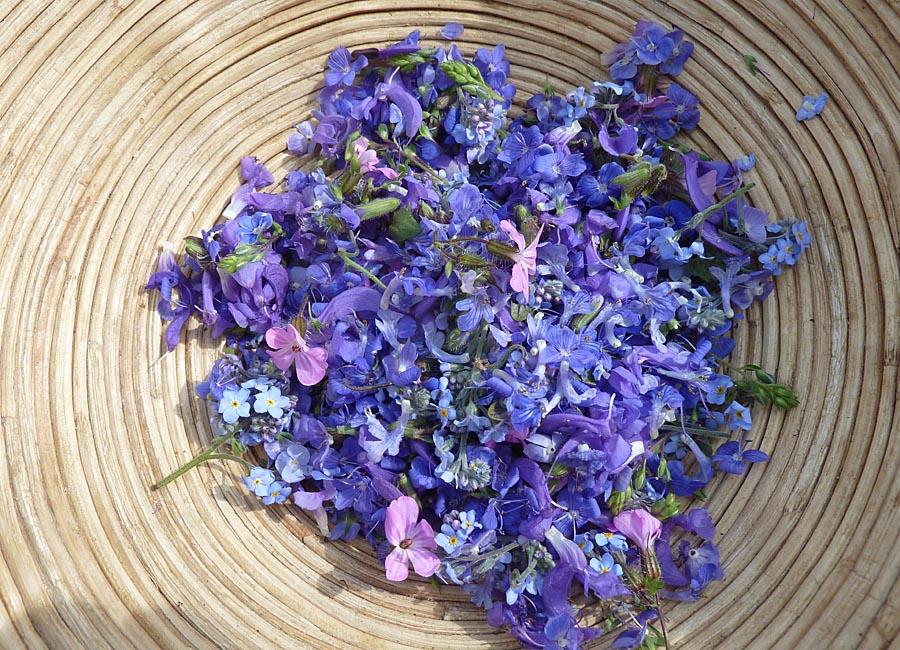 Lila Blüten: Salbei, Günsel, Vergissmeinnicht, Ruprechtskraut, Purpurote Taubnessel
