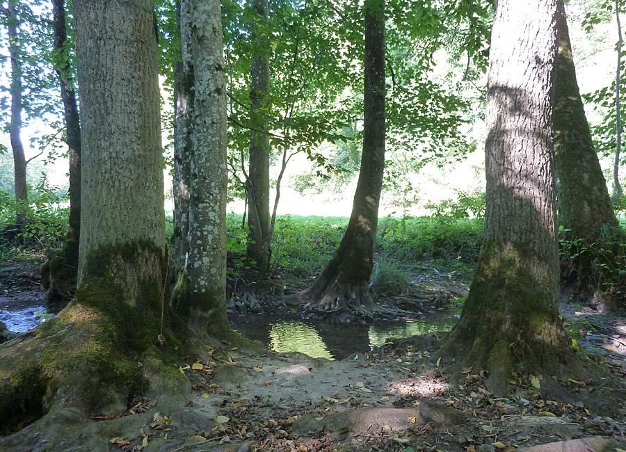 Wüstenbach
