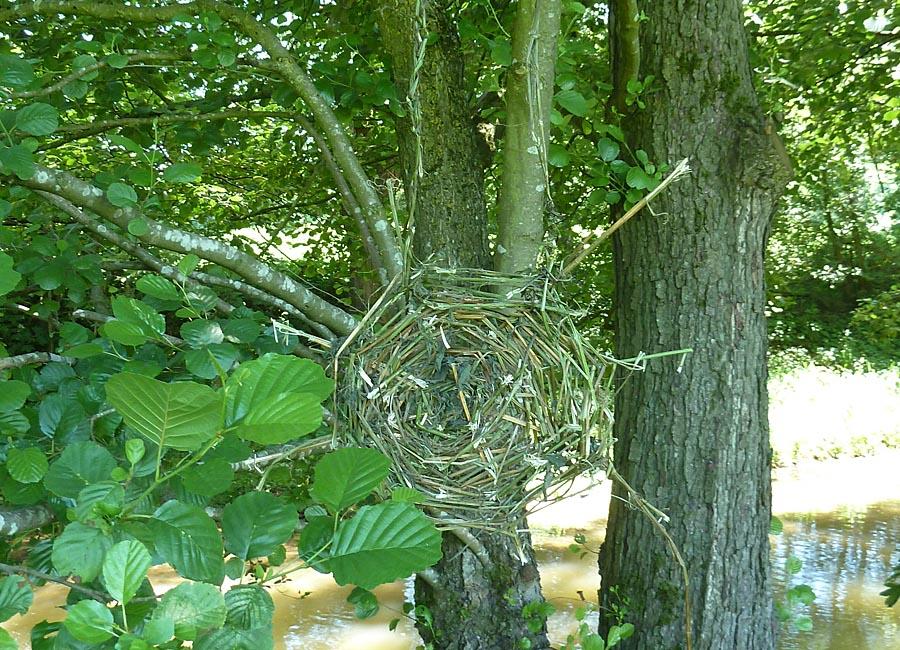 Brennnesselspinnennetz