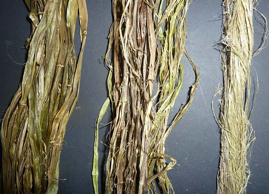 nocht feuchte, getrocknete und von Bast befreite Faserstränge
