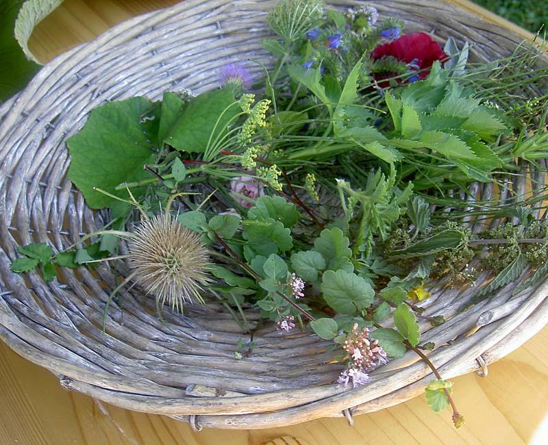 Pflanzen der Kräuterwanderungen