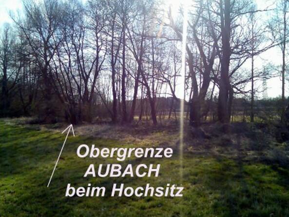 Obergrenze Aubach beim Hochsitz
