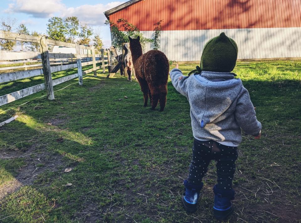 Johanna genießt die Alpakas mit einem gewissen Abstand