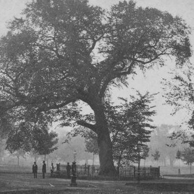 Planting Elm Trees