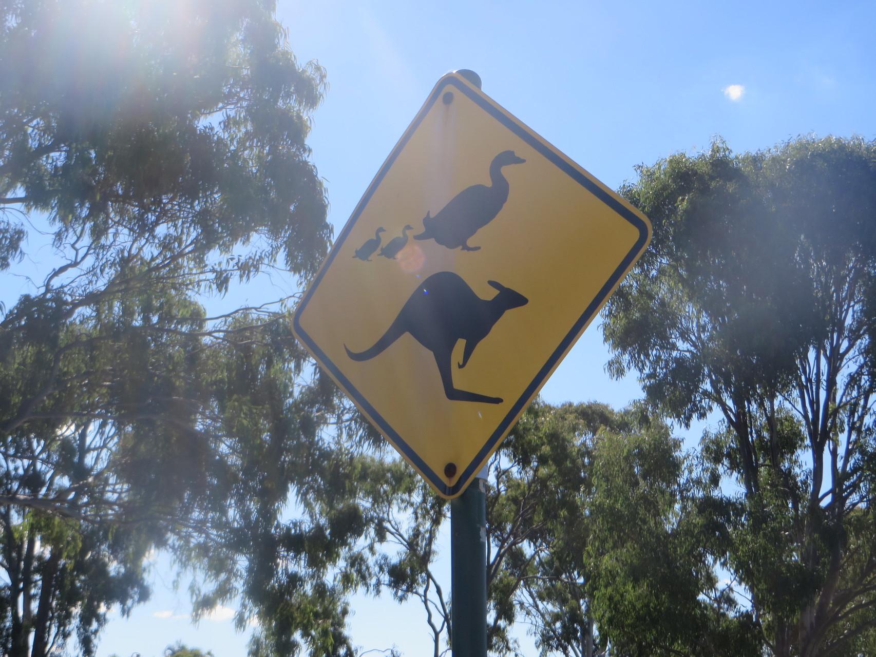 ...auch Enten werden hier berücksichtigt. :-)