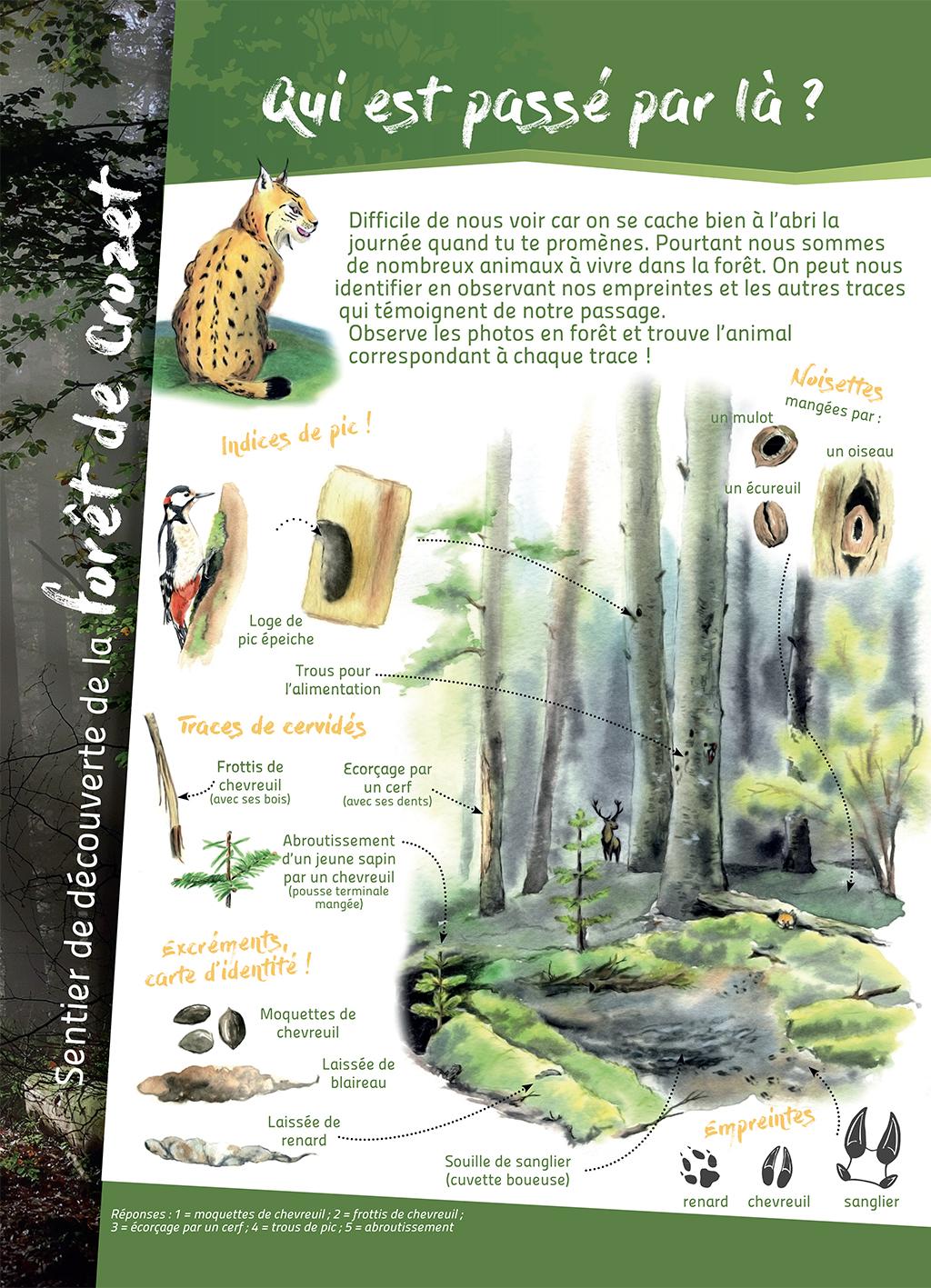 panneau, pédagogique, traces d'animaux, forêt, nature, illustration