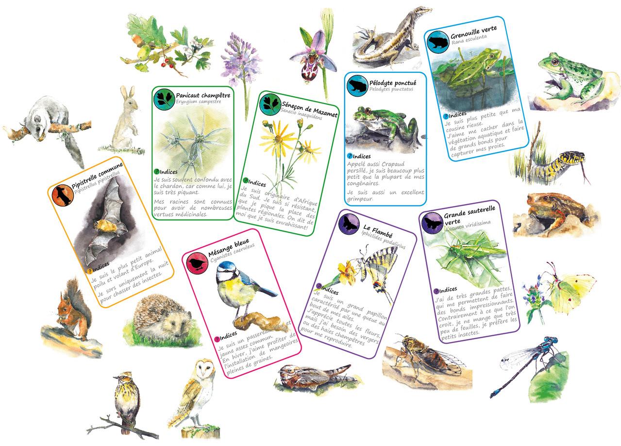 conception et illustration d 39 un jeu de cartes sur la biodiversit lb illustrations. Black Bedroom Furniture Sets. Home Design Ideas