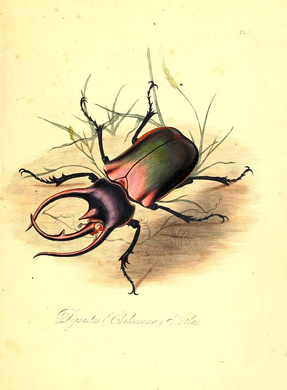 Natural history of the insects of India, H.G. Bohn, 1842